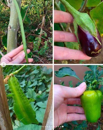 Kramer vegetables