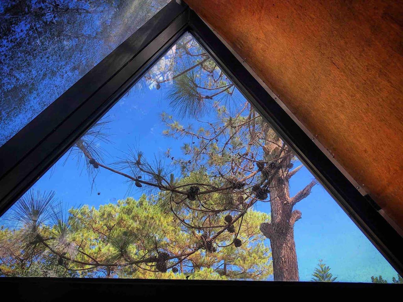 Pine Cone Treehouse
