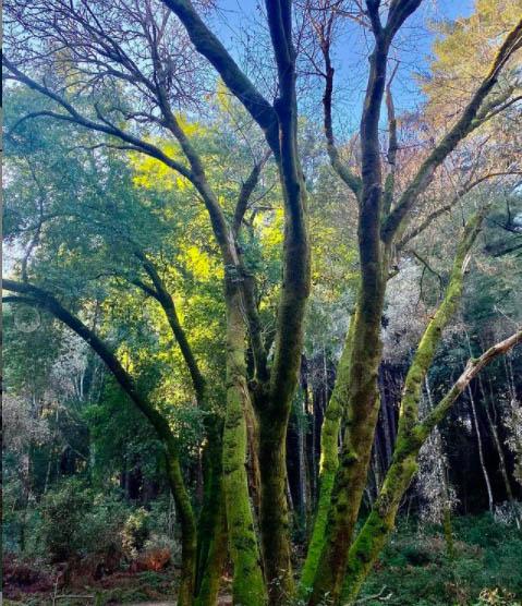 ovilson Fernandez hiking