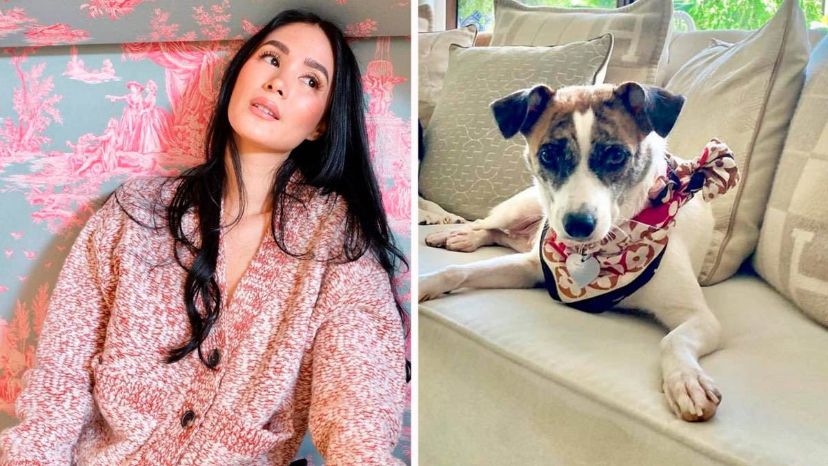 Heart Evangelista pet dog Cheche
