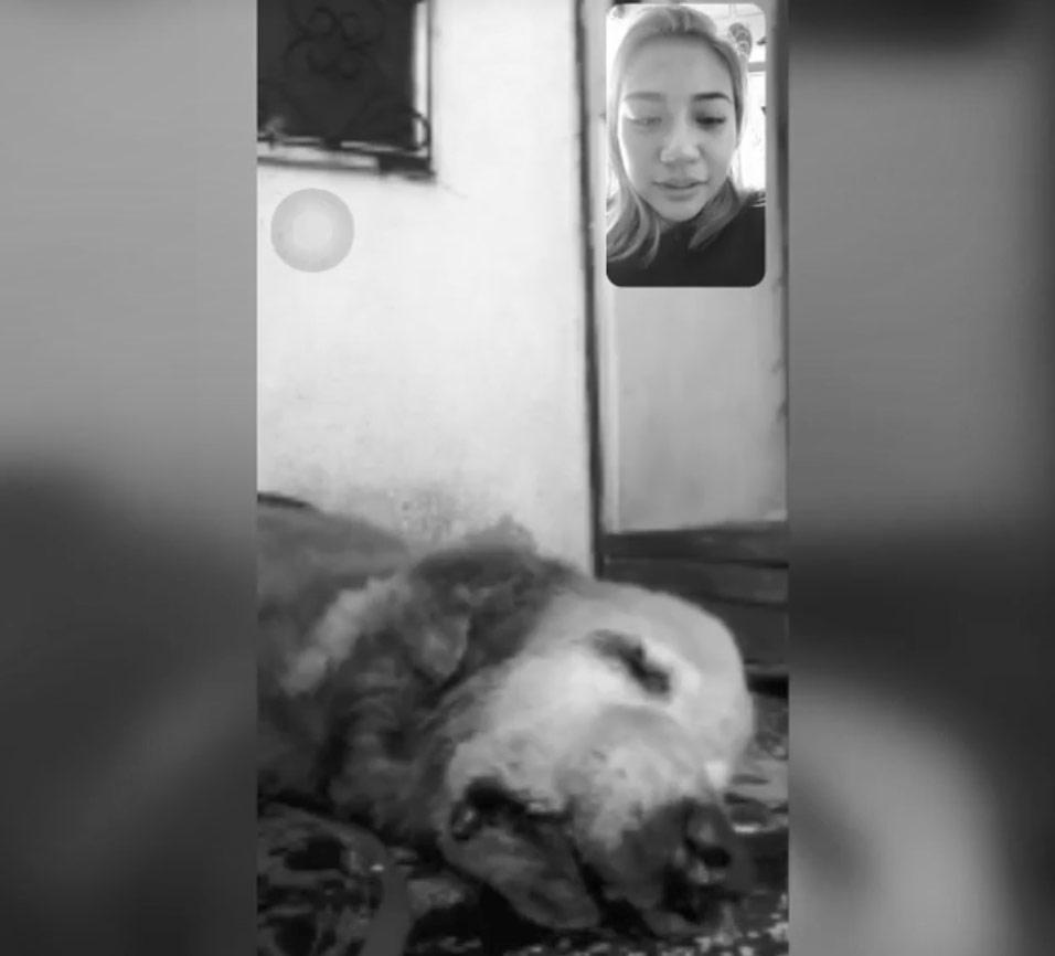 morissette amon videocall pet dog adam before death
