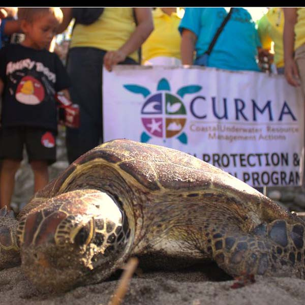 Carlos Tamayo sea turtles safe hatchery Curma