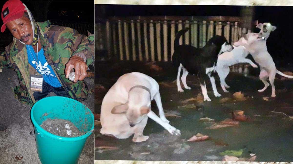 Tatay Johnny Manglugay  Paw Patrol sea turtle eggs dalampasigan La Union rescue sea turtle hatchery